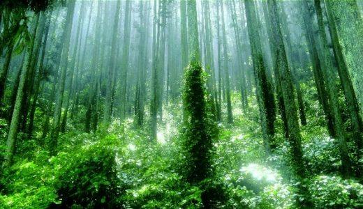 生態系内の物質とエネルギーの動き
