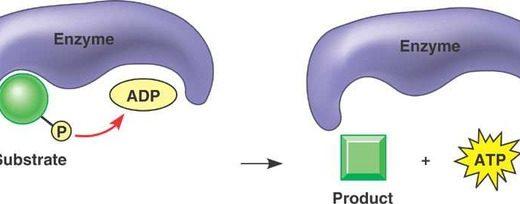 基質レベルのリン酸化と酸化的リン酸化