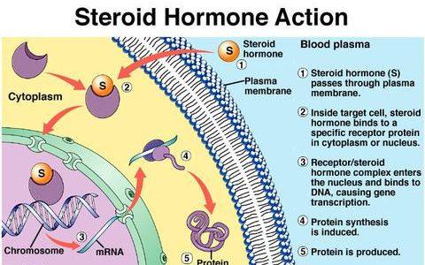 [論述]ステロイドホルモンとペプチドホルモンの違い