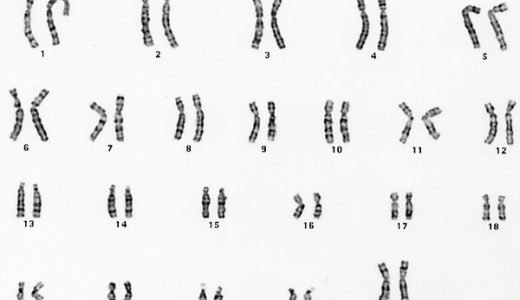 染色体について-相同染色体・遺伝子座・性染色体-