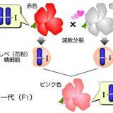 様々な様式の遺伝