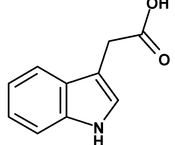 茎と根の成長-オーキシン-