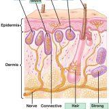 皮膚感覚-感覚点(痛点、冷点、圧点、温点)