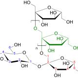原尿量・流入血液量の計算-イヌリンとパラアミノ馬尿酸-