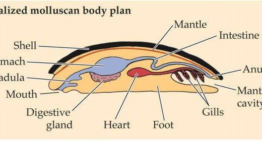 軟体動物の構造と生態