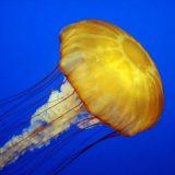 刺胞動物(二胚葉動物)の構造と生態