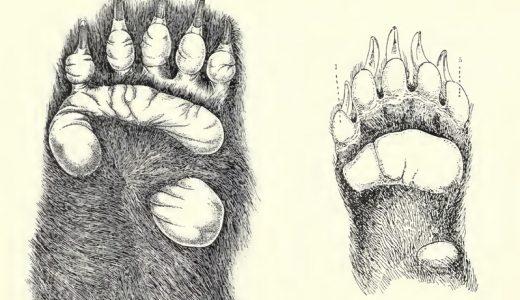 【Q&A】パンダの指は5本?6本?7本?何本?