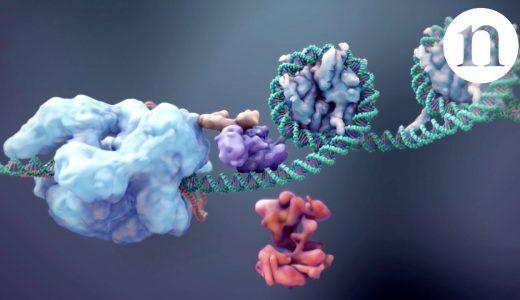 【マニアック】遺伝子改変技術「CRISPR-Cas9」がとっても有能そうな匂いがする!