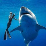 ハワイ沖で撮影された世界最大級6mのホオジロザメが巨大すぎる!!