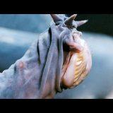 ヌタウナギの捕食シーンがやはりホラー。顎がないだけで怪物感が増す。