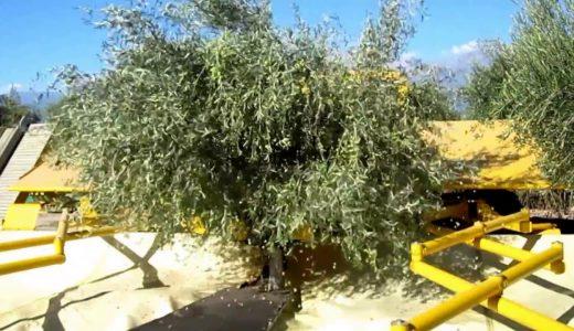 オリーブの実を超効率的に収穫できるマシーンを作ってみた