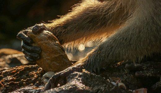 サルが道具を使うと一気に親近感が湧くから不思議