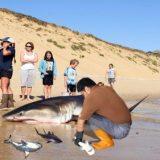 死んだサメのお腹を切り開いてみたら生きている赤ちゃんが出てきた!