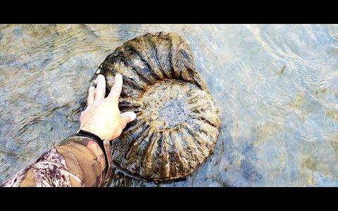 小川を歩きながら石器や6500万年前のアンモナイトの化石を次々に見つける映像