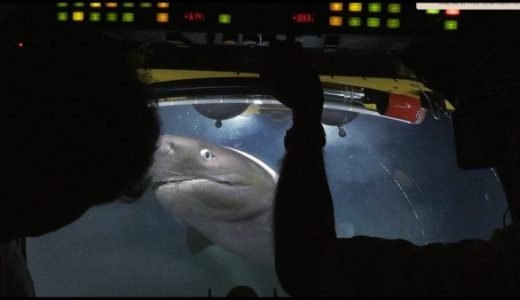 死んだクジラはどうなる?700m海底に潜って確かめに行ったらサメが貪っていた