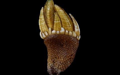 【Q&A】カメノテは貝の仲間?甲殻類の仲間?