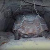 地面にあるトンネルをカメラ付きの車で探検してみたら色んな生物に出会えた!