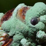 影の支配者。菌類の美しすぎる姿を撮影してみた