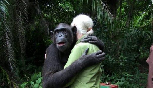 保護されていたチンパンジーが人間との別れを惜しむ姿が泣ける