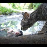【閲覧注意】猫は口減らしのために子猫を遠くに捨てるという衝撃の事実