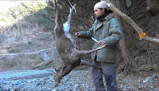 【狩猟】ハントした若いオスのシカを解剖してみた