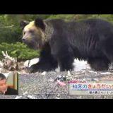 知床でヒトに慣れすぎた子熊を殺さざるを得ない状況が生まれる