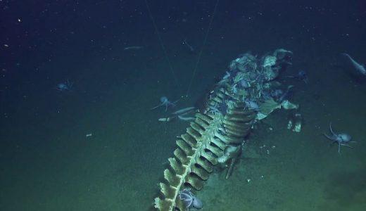 死んで海底に沈んだクジラが肉を食べられ骨だけになる
