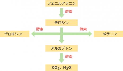 一遺伝子一酵素説とヒトの代謝異常まとめ