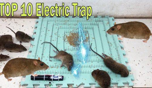 ありとあらゆる手段でネズミを捕獲する動画がすごすぎる!