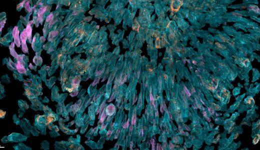 ハーバード大学が発表した3D顕微鏡映像がすごすぎる!
