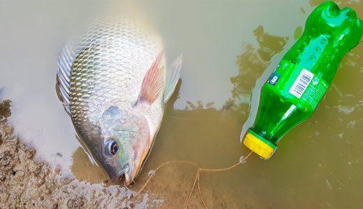 ペットボトルで罠を作り漁をしてしまう少年たちの映像