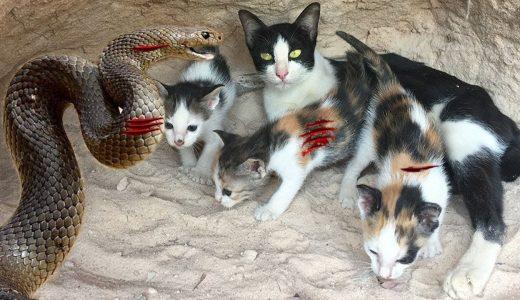 ネコの親子を襲うアナコンダを倒して助ける動画だけどヤラセ感がすごい!