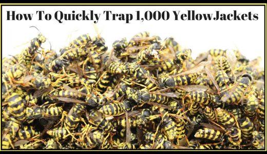 超簡単な罠でアシナガバチを大量に死滅させる映像