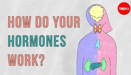 ホルモンとフェロモンの違いとは?