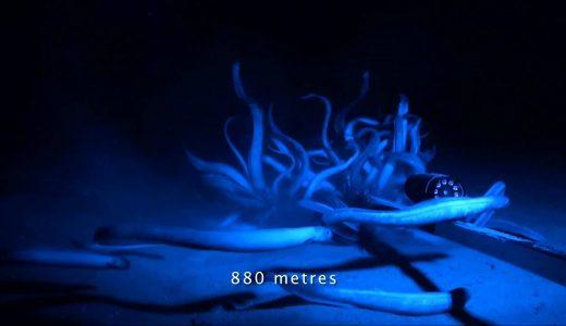 海底にカメラを設置していたら色んな魚が遊びにきてくれた映像
