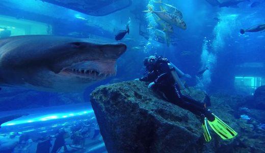 やばい!おっそろしいサメがめちゃくちゃ近づいてきた映像
