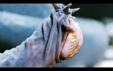 敵に襲われると恐ろしい量の粘液を吐き出すヌタウナギがすごくヌチョヌチョ