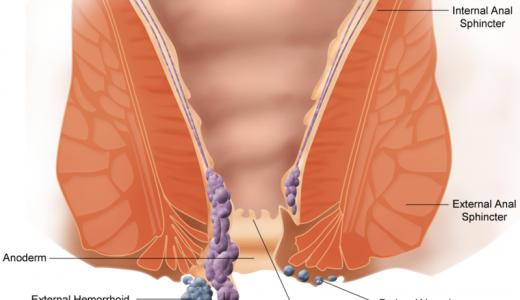 肛門は2つの筋肉によって構成されている-肛門括約筋・肛門挙筋の働き-