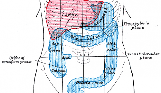 大腸(1.5m)を通過するとどれくらいの量の水が吸収される?