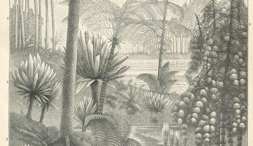 石炭紀に繁栄した木生シダ植物はどのような植物?