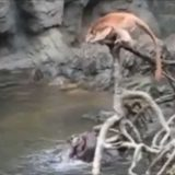 【閲覧注意】サルvsカワウソの壮絶な映像