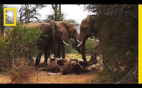 【悲しみ注意】死を悼む動物たちの姿が悲しすぎる【動画まとめ】