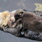 母性に目覚める!!母親に甘える動物たちが可愛すぎる!!【動画まとめ】