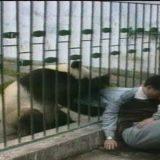見かけに騙されてはいけない!パンダが人に牙を向く衝撃映像【動画まとめ】