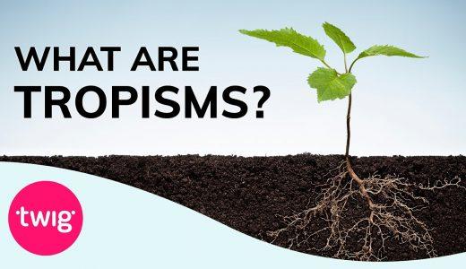 植物のダイナミックな動き(成長・屈性・傾性)動画まとめ