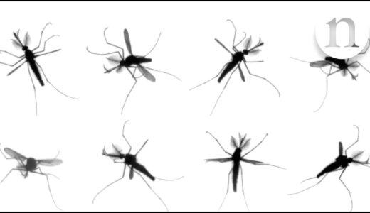 カ(蚊)の1秒間あたりの羽ばたきの回数は?