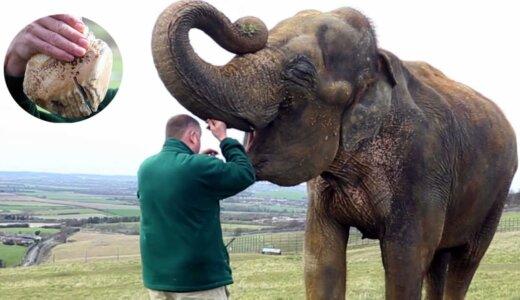 【閲覧注意】動物たちの虫歯を抜歯する様子が超痛そう…