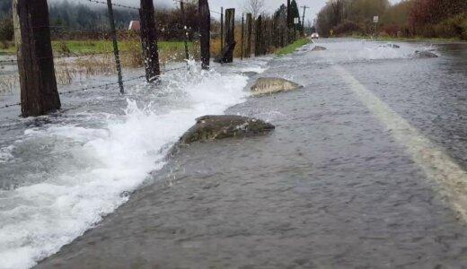 【動画】大雨で道路が水びだしになった所をサケが遡上する