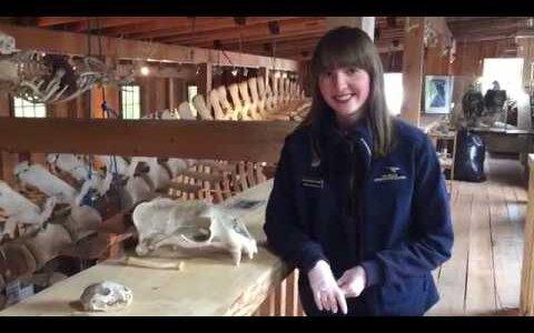 【動画】お姉さんが笑顔で陰茎骨について説明する