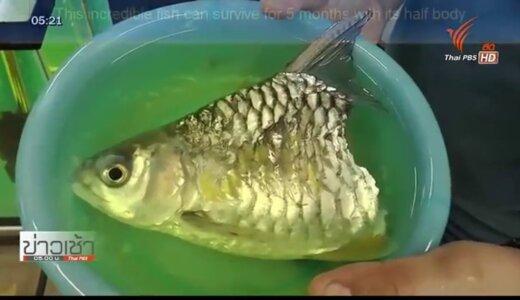 【閲覧注意】体を半分にされても5か月間生き延びた魚がすごすぎる【動画】